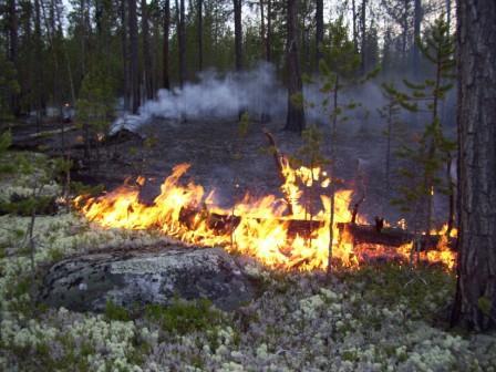 Лесные пожары Бедствие лесов России